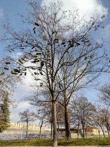 skate-shoe-tree-Alcoy-foto-by-Fhire