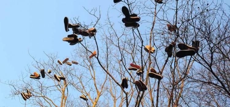 skate-shoes-hanging-tree